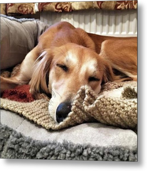It's Been A Hard Day...  #saluki Metal Print