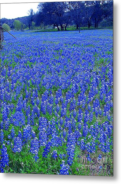 It's Spring - Texas Bluebonnets Time Metal Print
