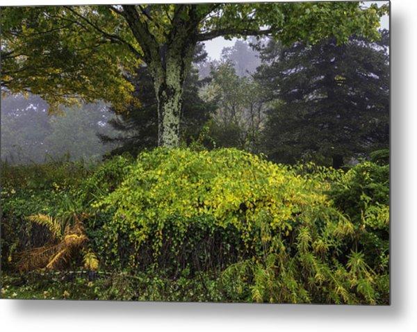 Ivy Garden Metal Print