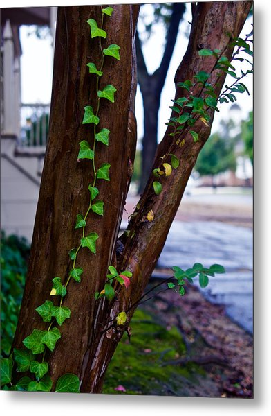 Ivy In Williamsburg Metal Print