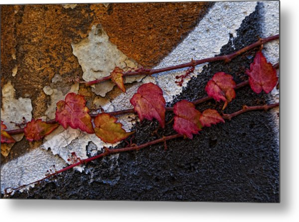 Ivy On Painted Wall Metal Print by Robert Ullmann