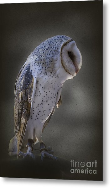 Ivy The Barn Owl Metal Print