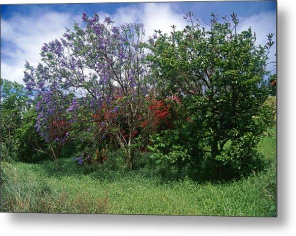 Jacarandra Tree Blooming In Maui Metal Print by George Oze