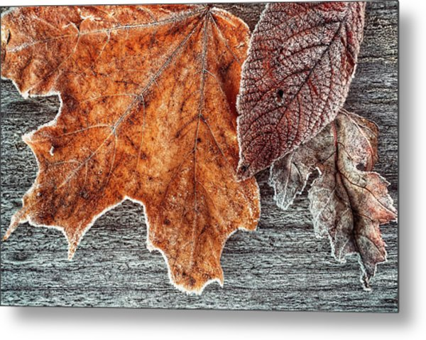 Jack Frost's Touch Metal Print