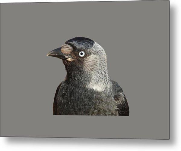 Jackdaw Corvus Monedula Bird Portrait Vector Metal Print