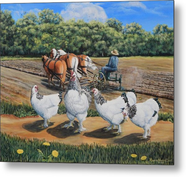 Jacobs Plowing And Light Bramah Chickens Metal Print