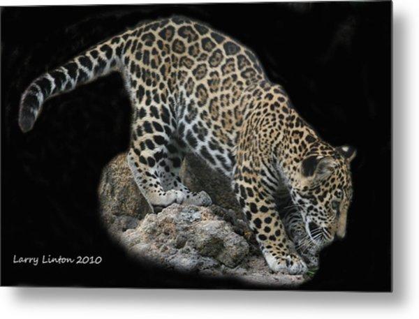 Jaguar Cub Metal Print by Larry Linton