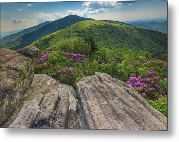 Jane Bald Rhododendrons Metal Print