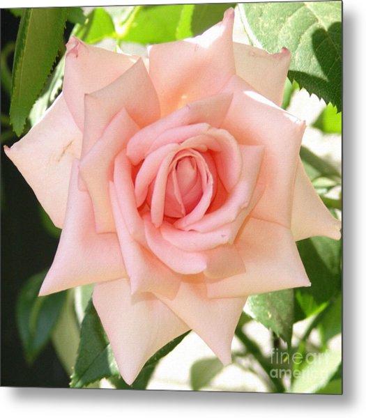 Janet's Pink Rose Metal Print