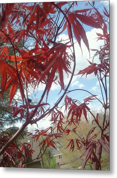 Japanese Maple Leafing Out Metal Print
