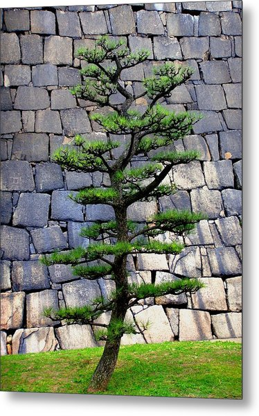 Japanese Tree Metal Print