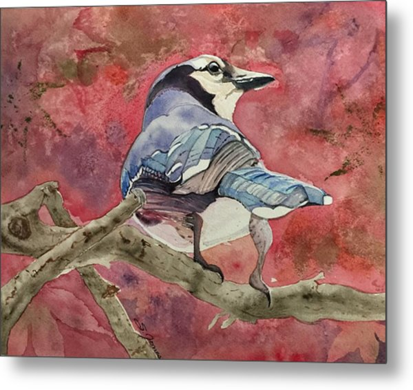 Jay In The Japanese Maple Metal Print