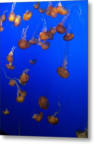 Jelly Fish 1 Metal Print by Dawn Marie Black