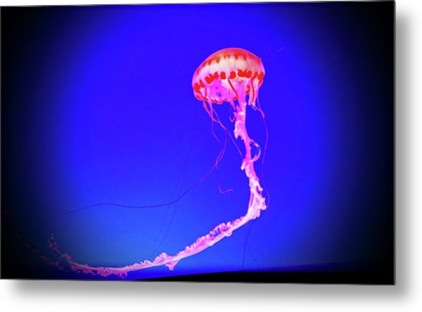 Metal Print featuring the photograph Jellyfish Dance IIi by Pacific Northwest Imagery