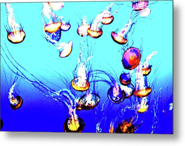 Metal Print featuring the photograph Jellyfish Dance IIII by Pacific Northwest Imagery