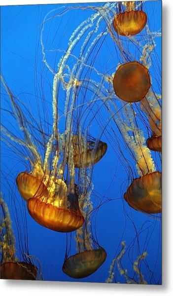 Jellyfish Family Metal Print
