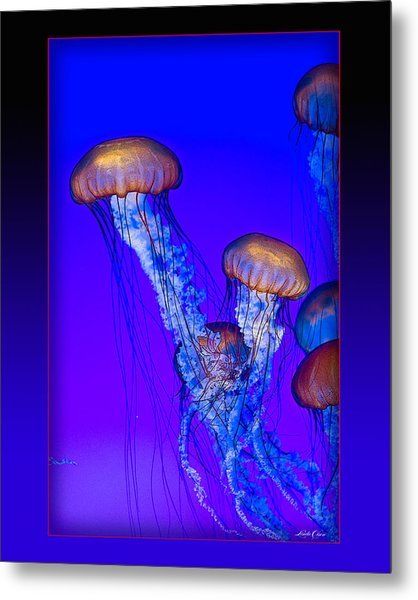 Jellyfish Floating Up Metal Print