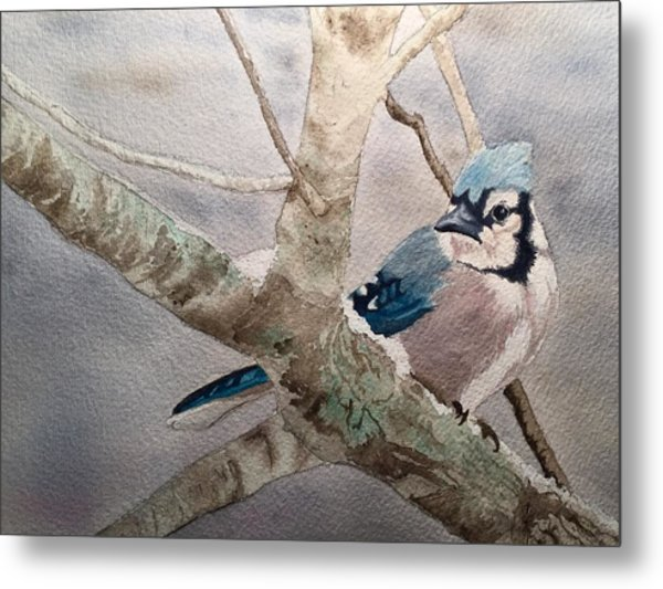 Cold Winter's Jay Metal Print