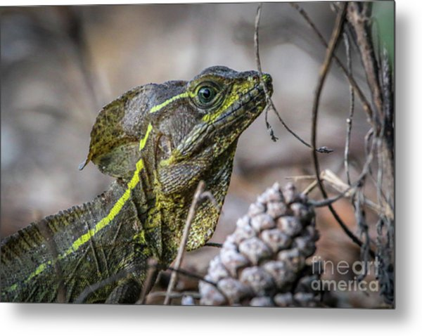 Metal Print featuring the photograph Jesus Lizard #2 by Tom Claud