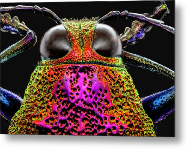 Jewel Beetle 3x Metal Print