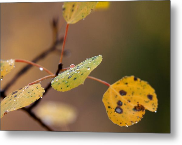Jewels Of Autumn Metal Print