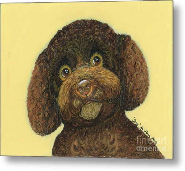 Joey Poodle Mix Metal Print
