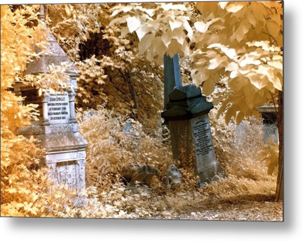 Metal Print featuring the photograph Autumnal Walk At Abney Park Cemetery by Helga Novelli