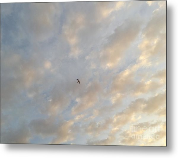 Jonathan Livingston Seagull Metal Print