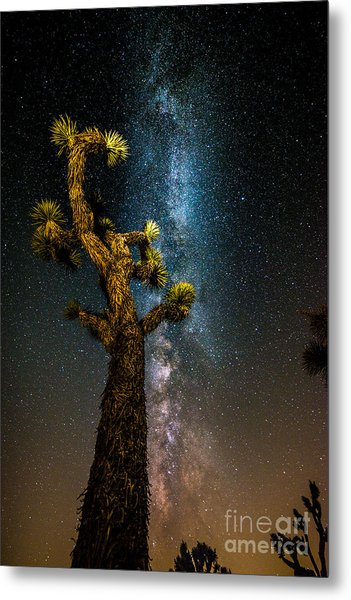 Joshua Tree And Milky Way Metal Print