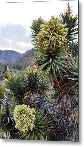 Joshua Tree Bloom Rainbow Mountain Metal Print