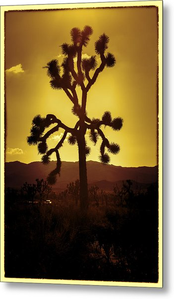 Joshua Tree Glow #2 Metal Print
