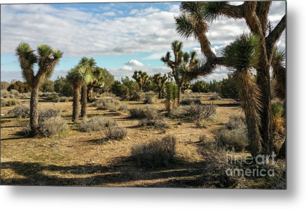 Joshua Tree's Metal Print