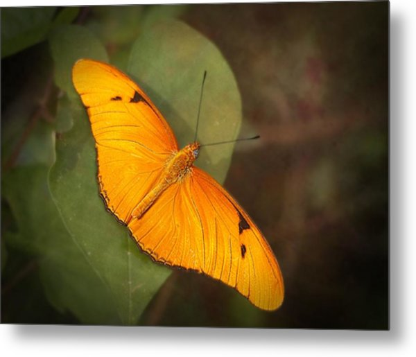 Julia Dryas Butterfly-2 Metal Print