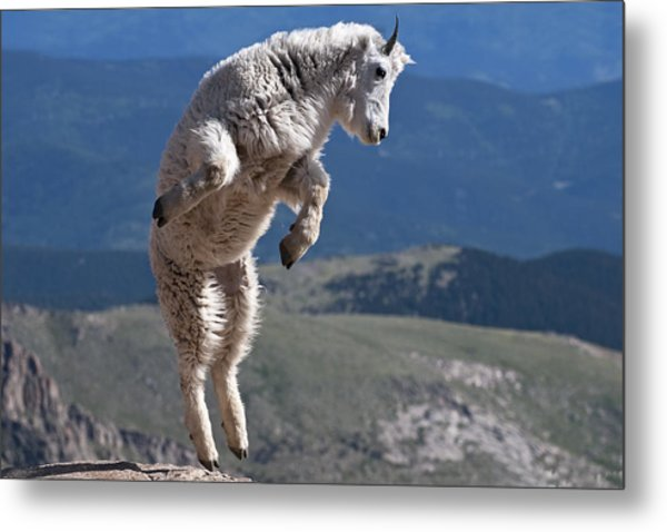Metal Print featuring the photograph Jump by Gary Lengyel