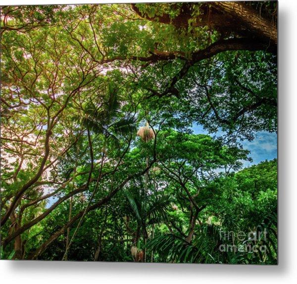 Jungle Canopy Kauai Hawaii Metal Print by Blake Webster