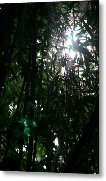 Jungle Light Metal Print by Brad Scott