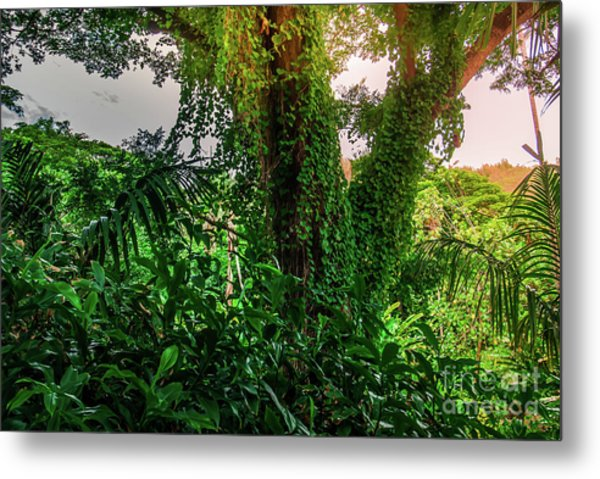 Jungle Vines Kauai Hawaii Metal Print by Blake Webster