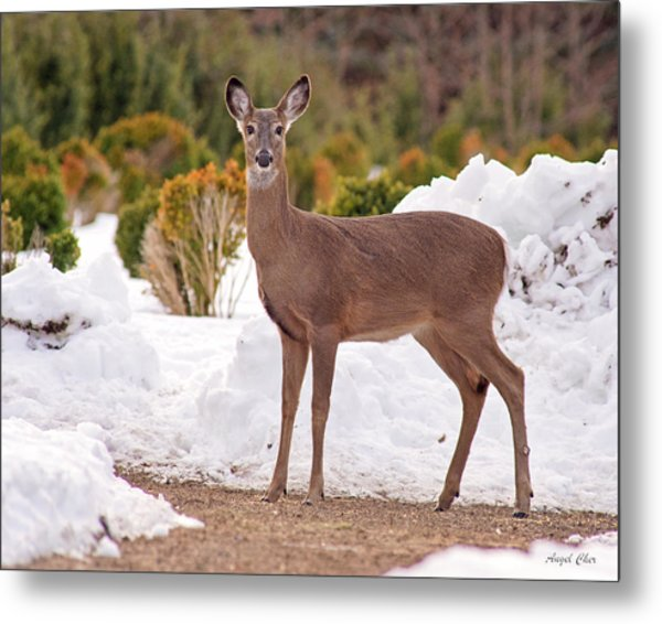 Metal Print featuring the photograph Junior by Angel Cher