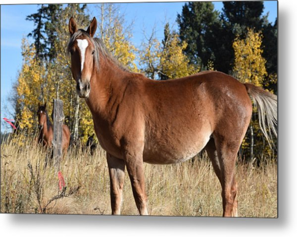 Horse Cr 511 Divide Co Metal Print