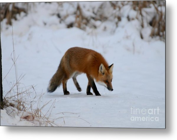 Just Hunting For Breakfast Metal Print