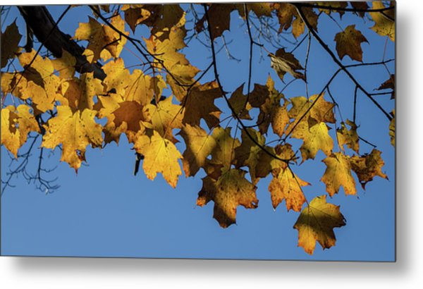 Just Leaves Metal Print