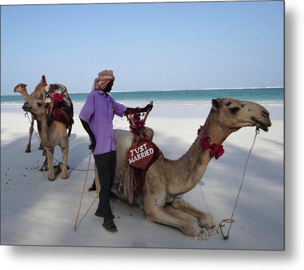 Just Married Camels Kenya Beach 2 Metal Print