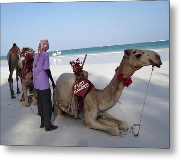 Just Married Camels Kenya Beach Metal Print