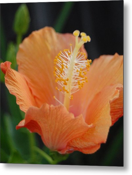 Just Peachy Metal Print by Jean Booth