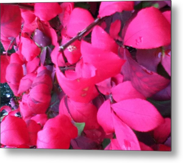 Just Red/pink Metal Print