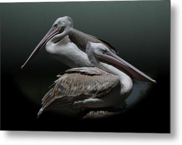 Juxtaposition - Pelicans Metal Print