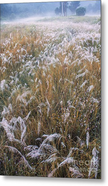 Kans Grass In Mist Metal Print