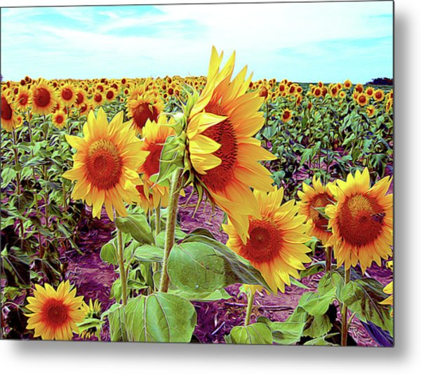 Kansas Sunflowers Metal Print