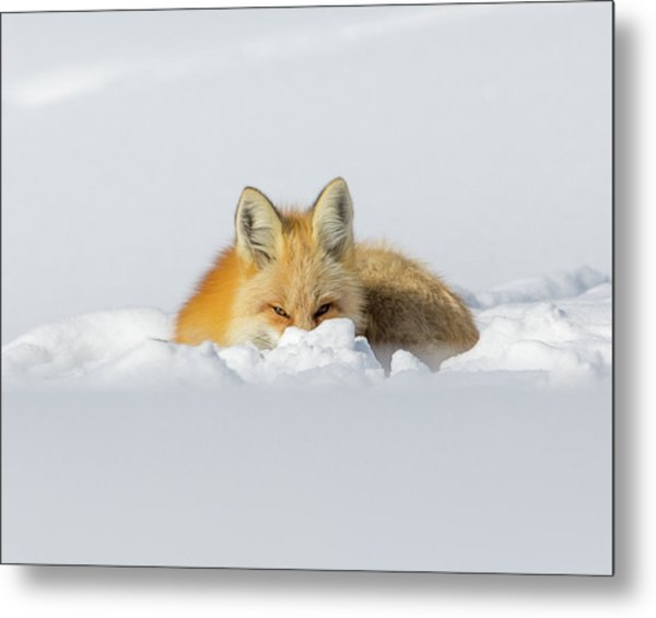 Snow Hide Metal Print