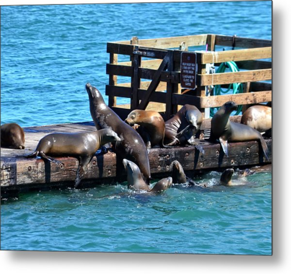 Keep Off The Dock - Sea Lions Can't Read Metal Print
